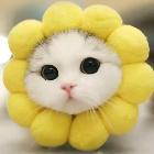 小黄帽♬情景助眠